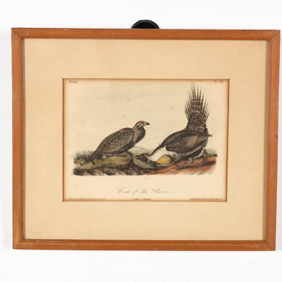 after John James Audubon (Am., 1785-1851), Six Prints - 5