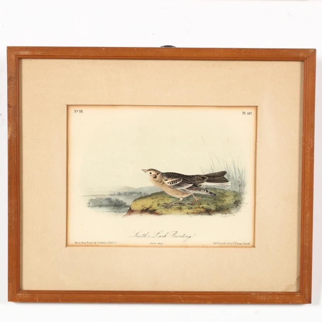 after John James Audubon (Am., 1785-1851), Six Prints - 6