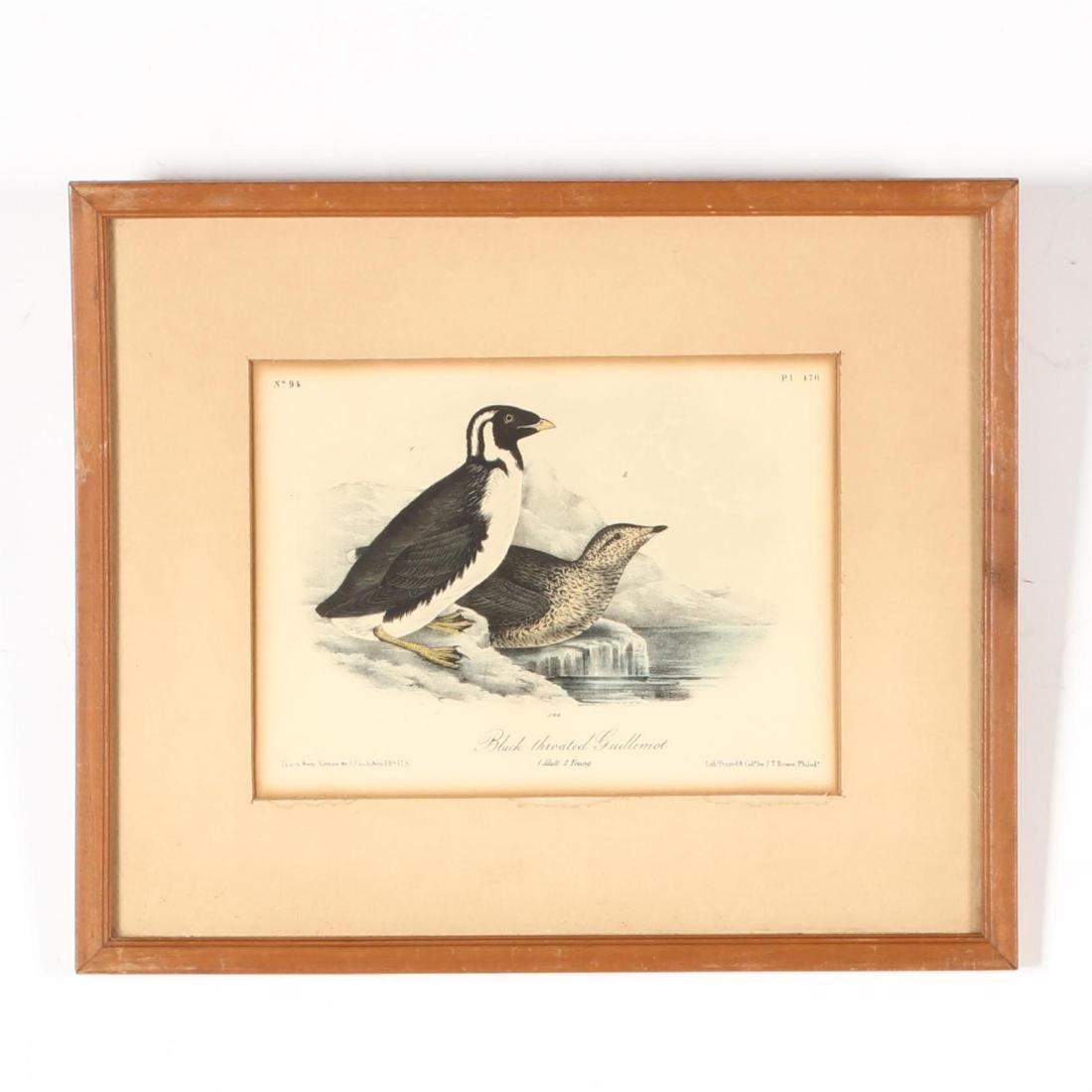 after John James Audubon (Am., 1785-1851), Six Prints - 7