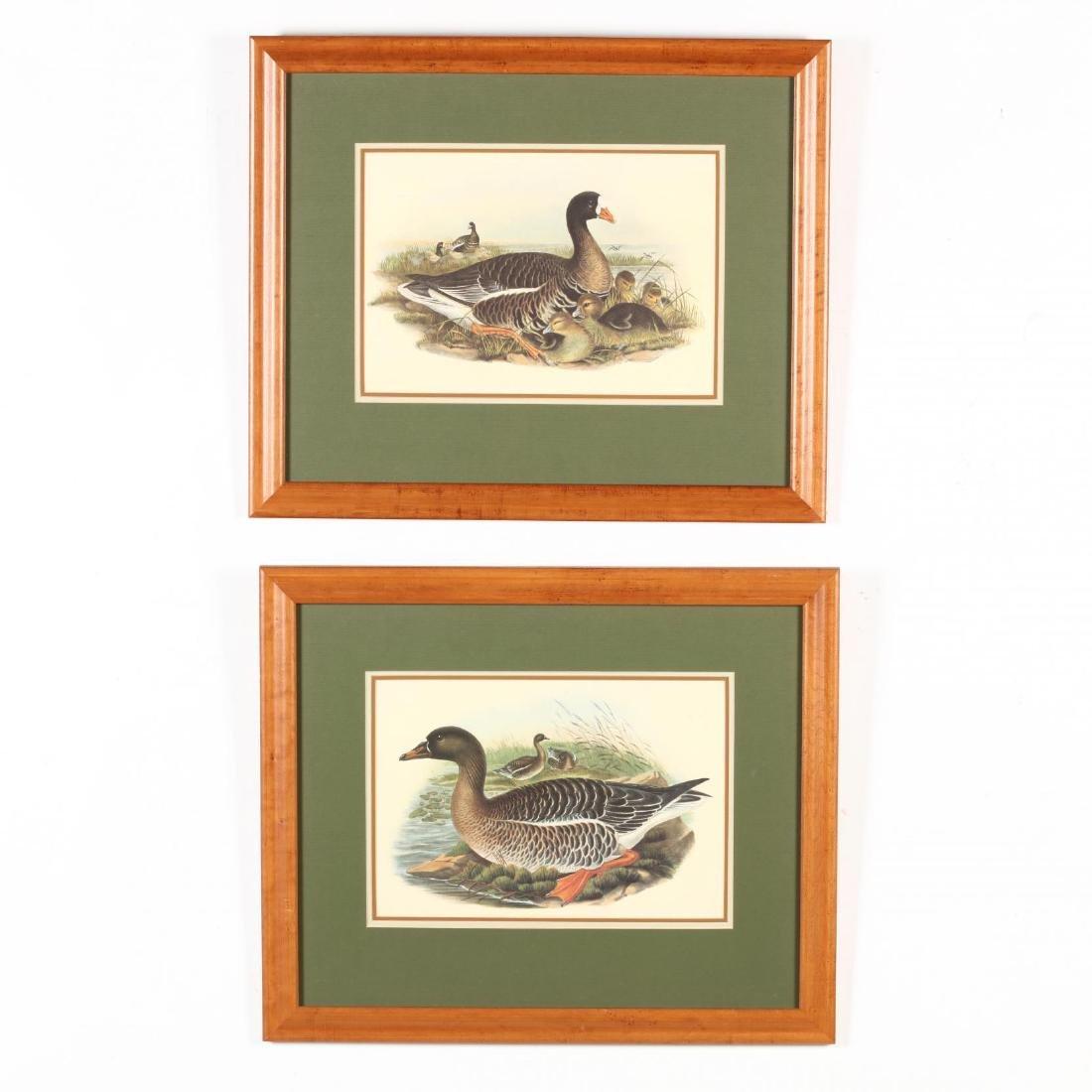Pair of Framed Ornithological Prints