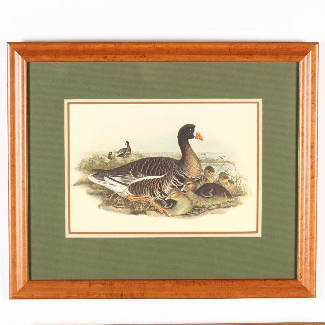 Pair of Framed Ornithological Prints - 2