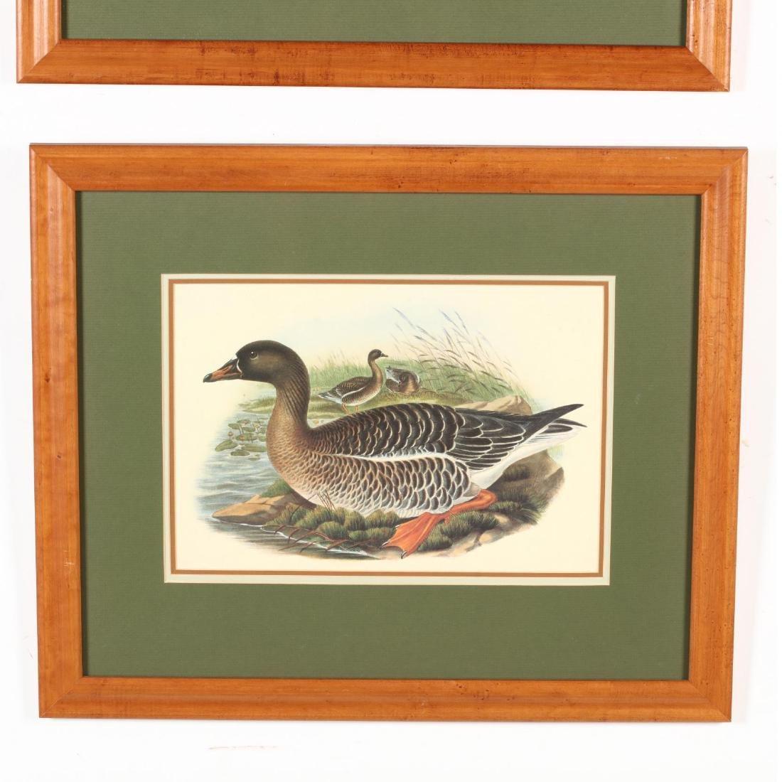 Pair of Framed Ornithological Prints - 3
