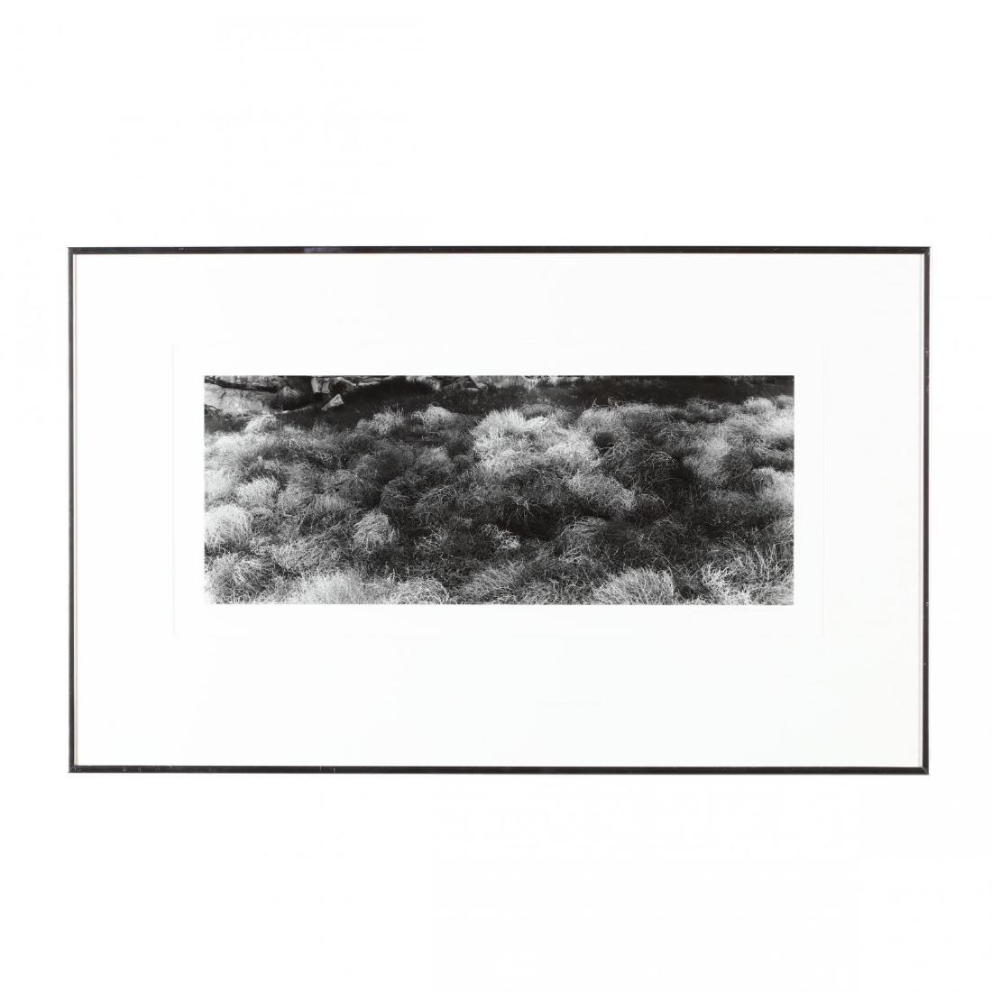 Gary Adams (CA/NV, 20th/21st Century), Sheep Mountain