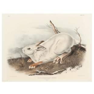 after John James Audubon (American, 1785-1851), Lepus