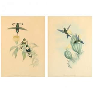Two Gould & Richter Hummingbird Lithographs