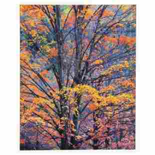American School Photograph of Autumn Leaves