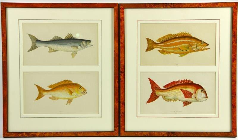5: Two Antique Fish Prints
