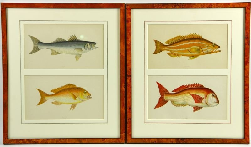 5: Two Antique Fish Prints