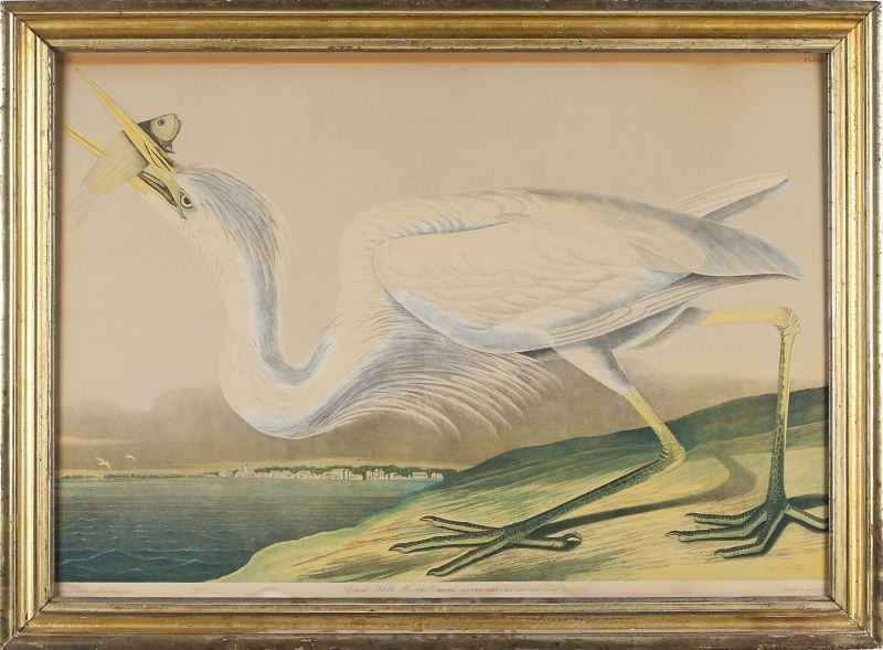 "124: after Audubon (1785-1851), ""Great White Heron"""