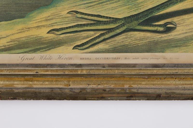 "124: after Audubon (1785-1851), ""Great White Heron"" - 3"