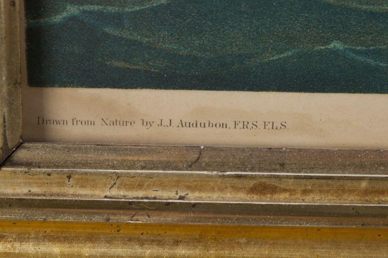 "124: after Audubon (1785-1851), ""Great White Heron"" - 4"