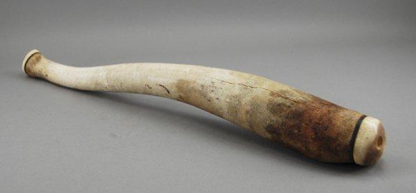 239: American Indian Fossil Walrus Baculum Eskimo Oosik