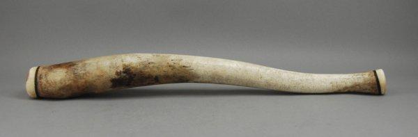 239: American Indian Fossil Walrus Baculum Eskimo Oosik - 6