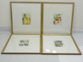 Group of 4 Well-Framed Botanical Prints of Fruits