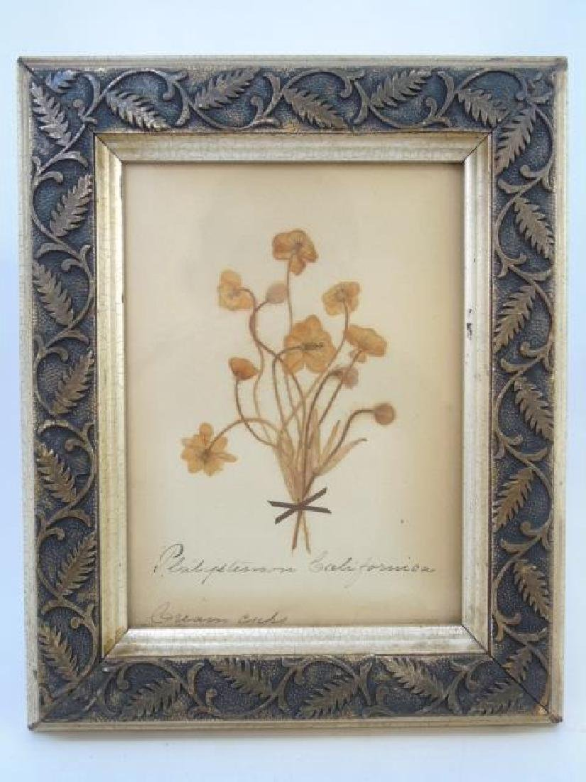 Pair Antique Botanical Studies & Vintage Engraving - 4