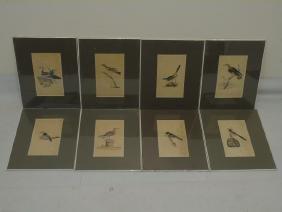 Set of 8 Matted Antique Ornithological Bird Prints