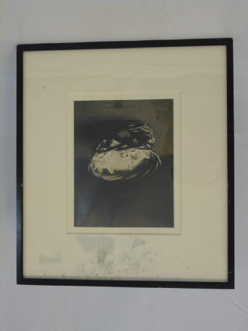 6 Seashell Antique Engravings & Photo of Kittens - 3