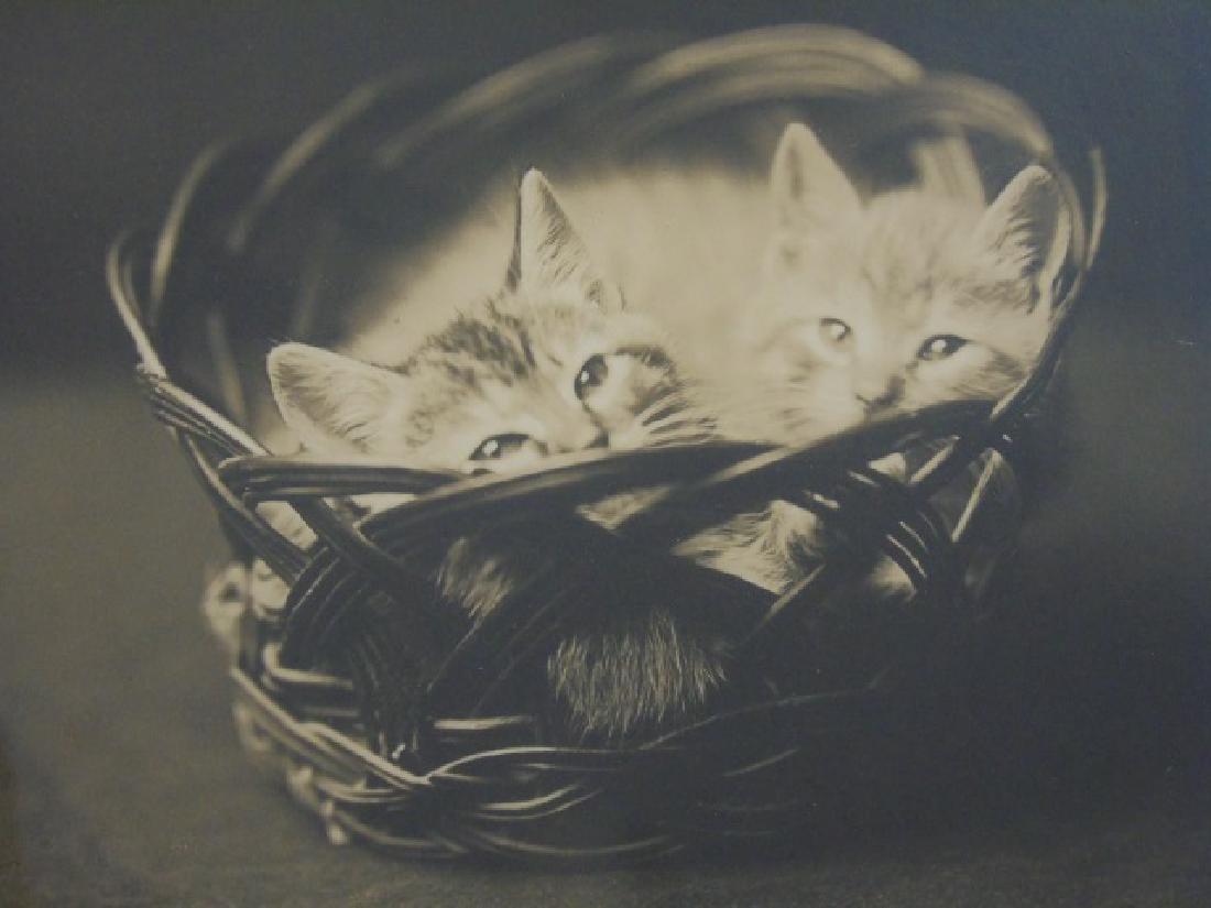 6 Seashell Antique Engravings & Photo of Kittens - 4