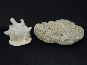 Large Coral Piece & Large Conch Shell