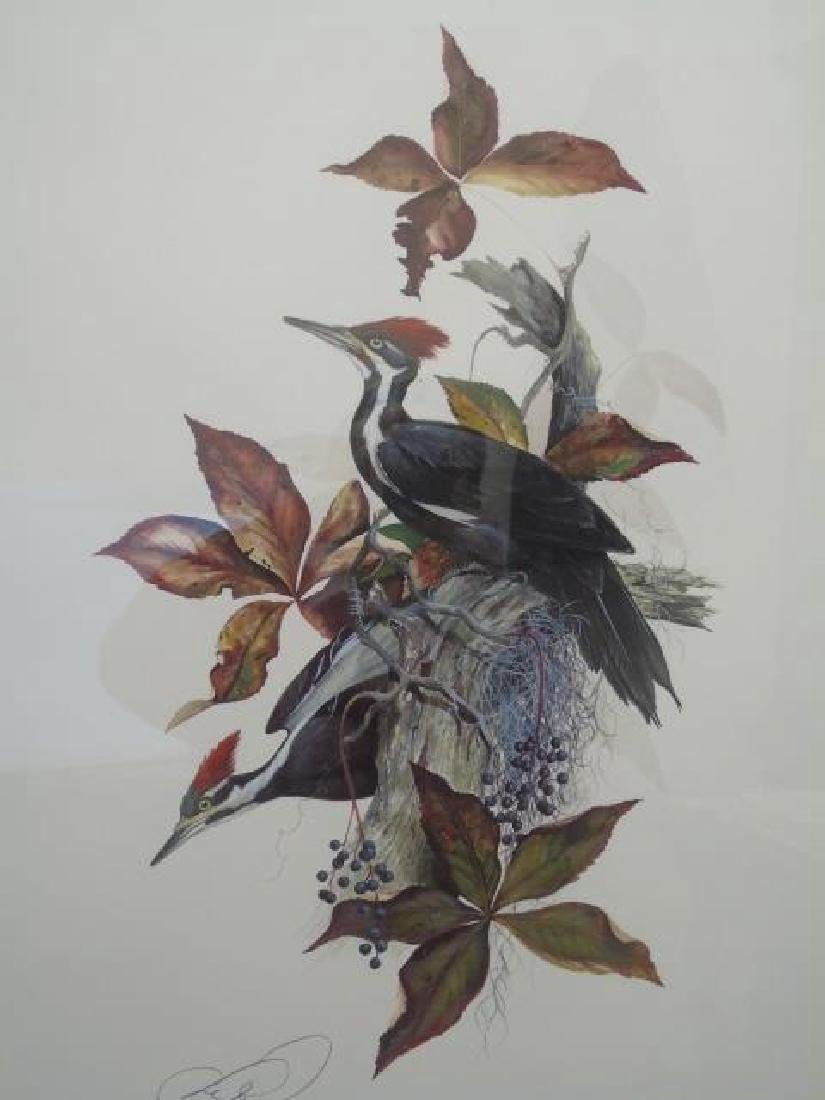 Large Print Pileated Woodpecker Signed Numbered - 2