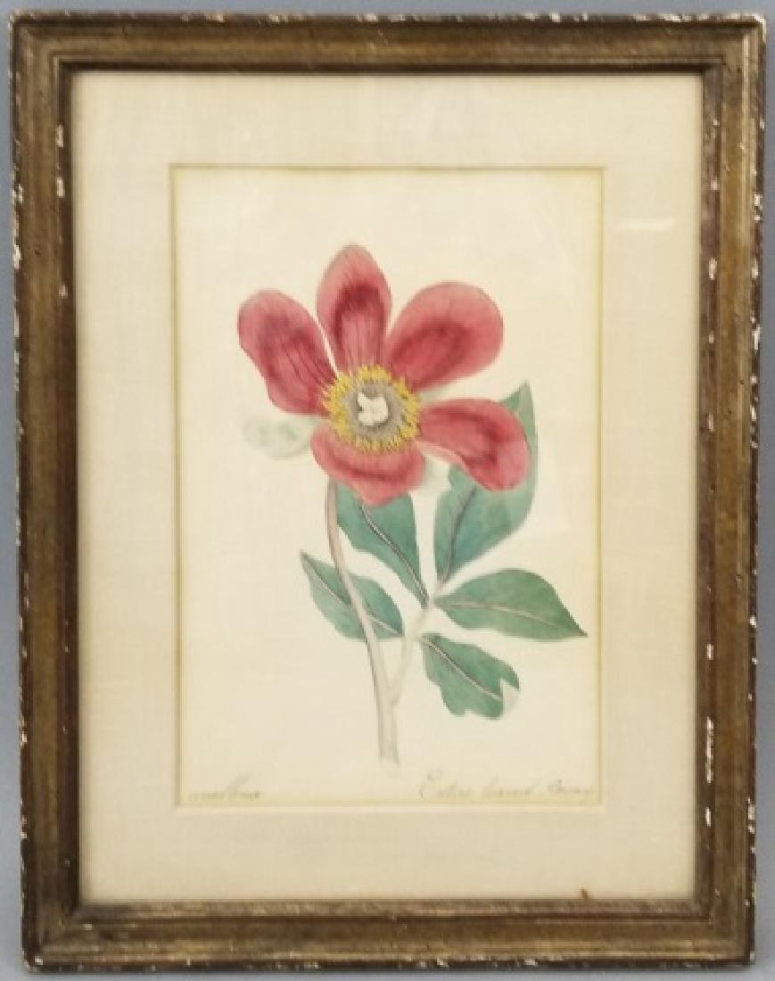Original 19th C Hand-Painted Botanical of Peony