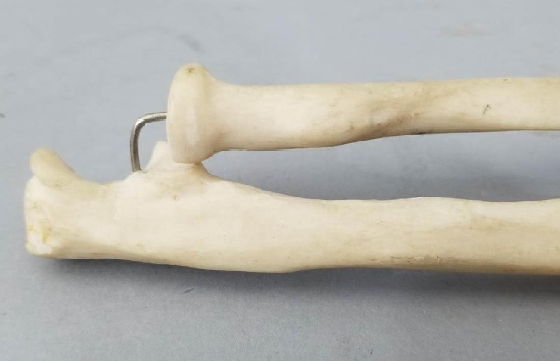 Vintage Medical Model Skeleton Bone Arm & Hand - 2