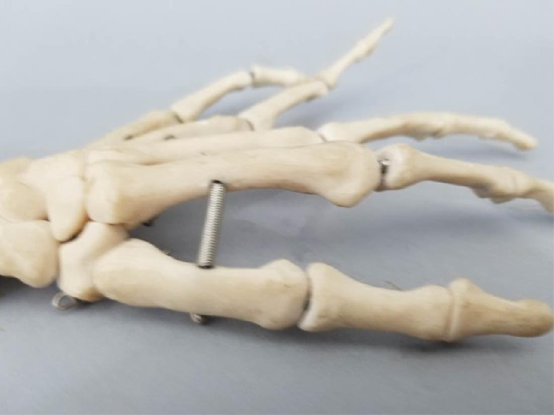 Vintage Medical Model Skeleton Bone Arm & Hand - 3
