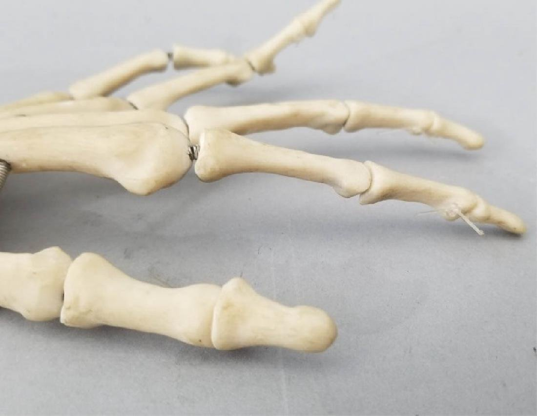 Vintage Medical Model Skeleton Bone Arm & Hand - 4