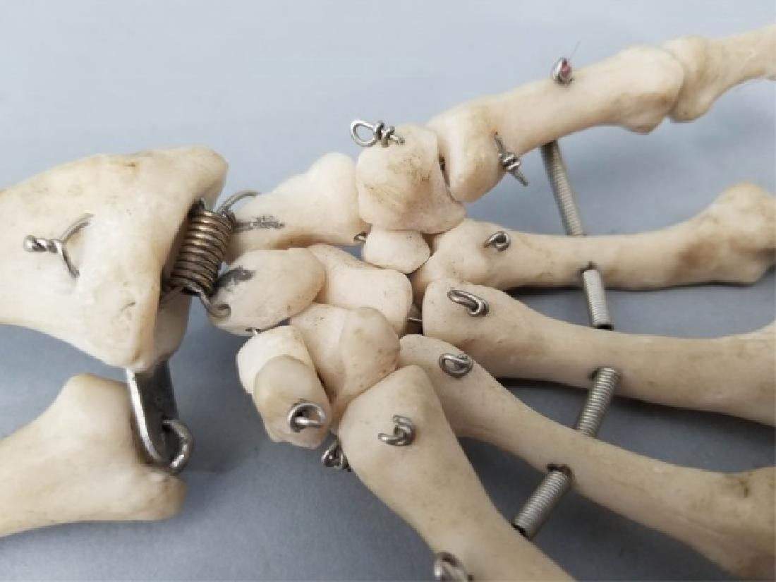 Vintage Medical Model Skeleton Bone Arm & Hand - 8