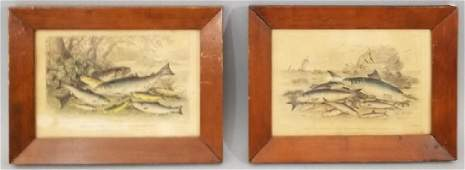 Pair Antique 19th C Hand Colored Fish Engravings