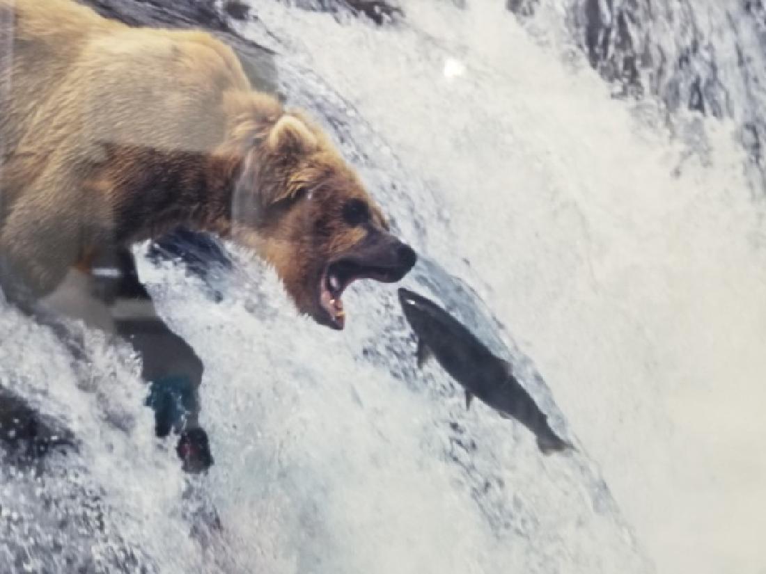 Pair of Framed Rod Kieft Photos of Bear & Moose - 4