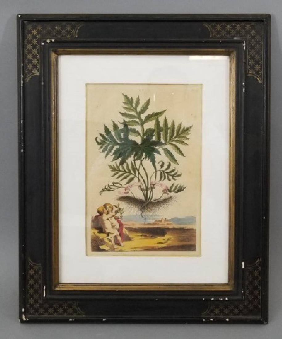 Antique Color Engraving Polypodium Sensibile Fern