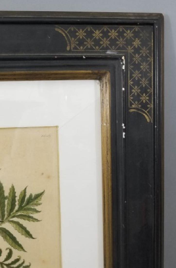 Antique Color Engraving Polypodium Sensibile Fern - 3
