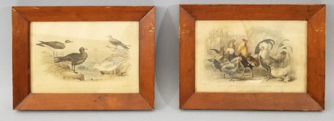 Pair Antique 19th C Hand Colored Bird Engravings