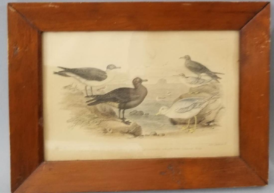 Pair Antique 19th C Hand Colored Bird Engravings - 4