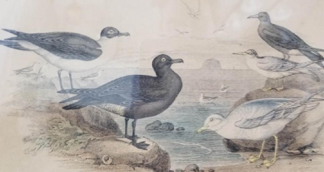 Pair Antique 19th C Hand Colored Bird Engravings - 5