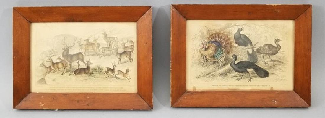 Pair Antique 19th C Hand Colored Stag Engravings