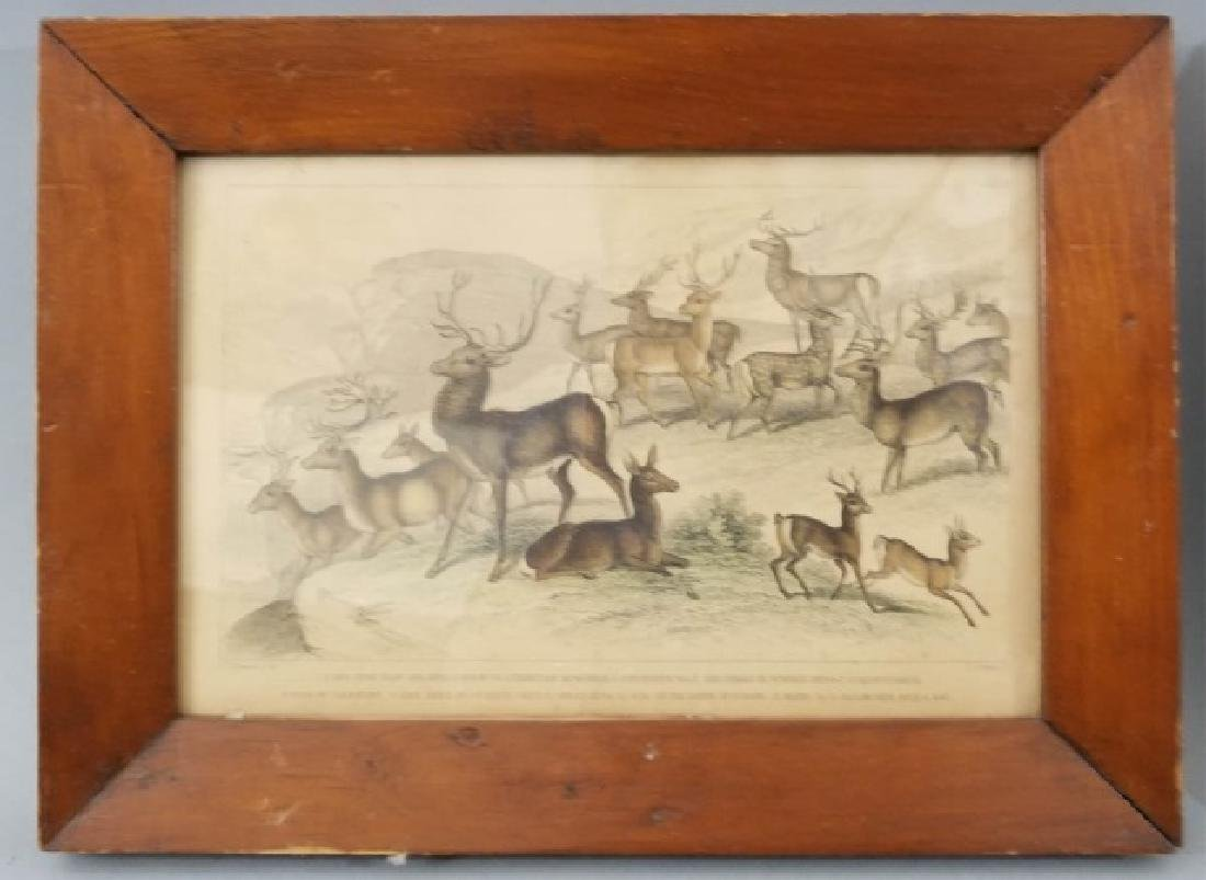Pair Antique 19th C Hand Colored Stag Engravings - 3