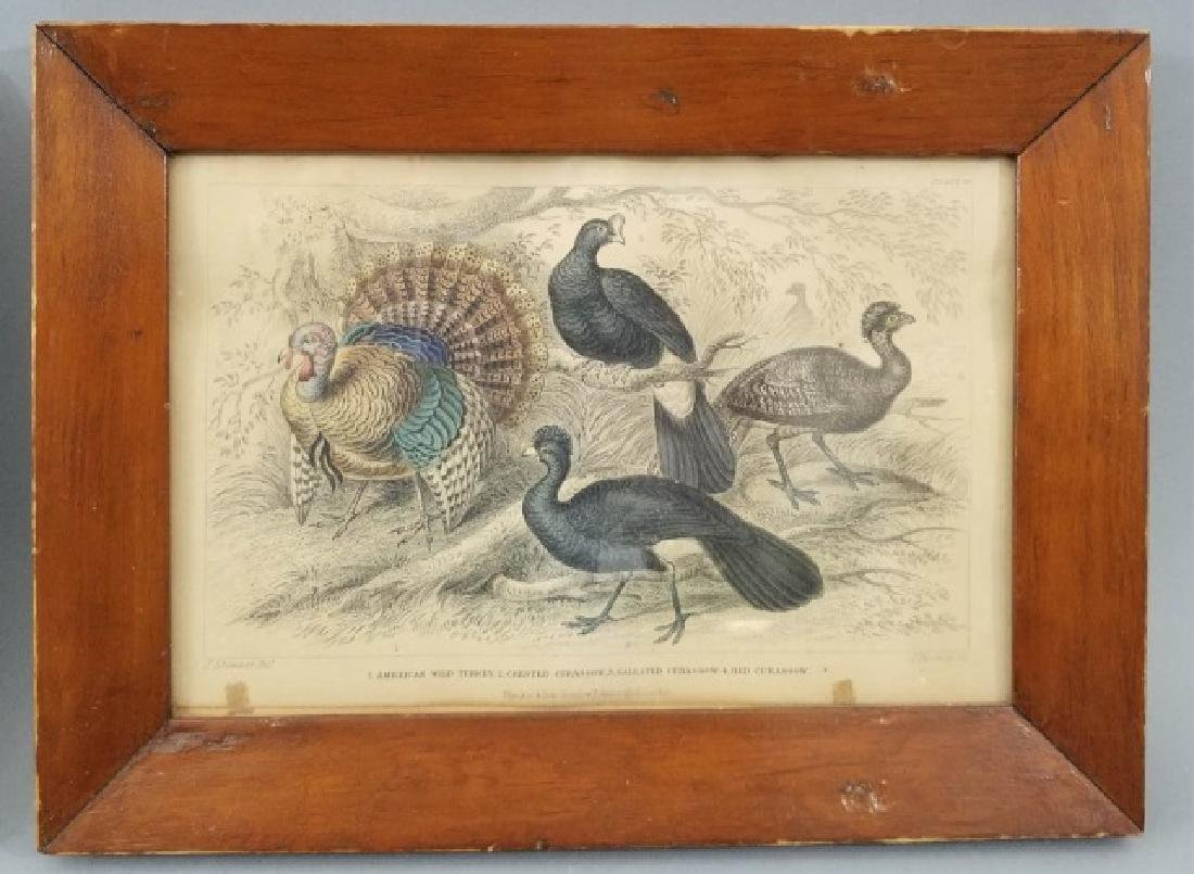 Pair Antique 19th C Hand Colored Stag Engravings - 4