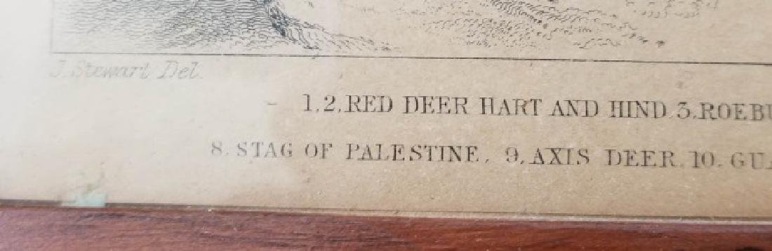 Pair Antique 19th C Hand Colored Stag Engravings - 5