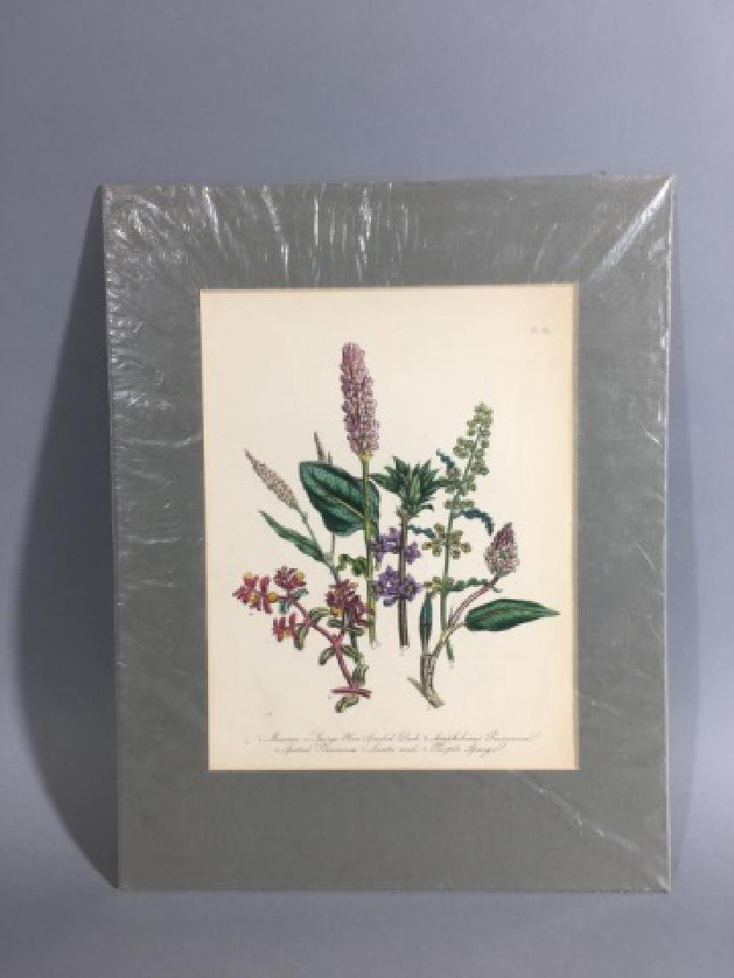 11 Matted Vintage Botanical Color Litho Prints - 10