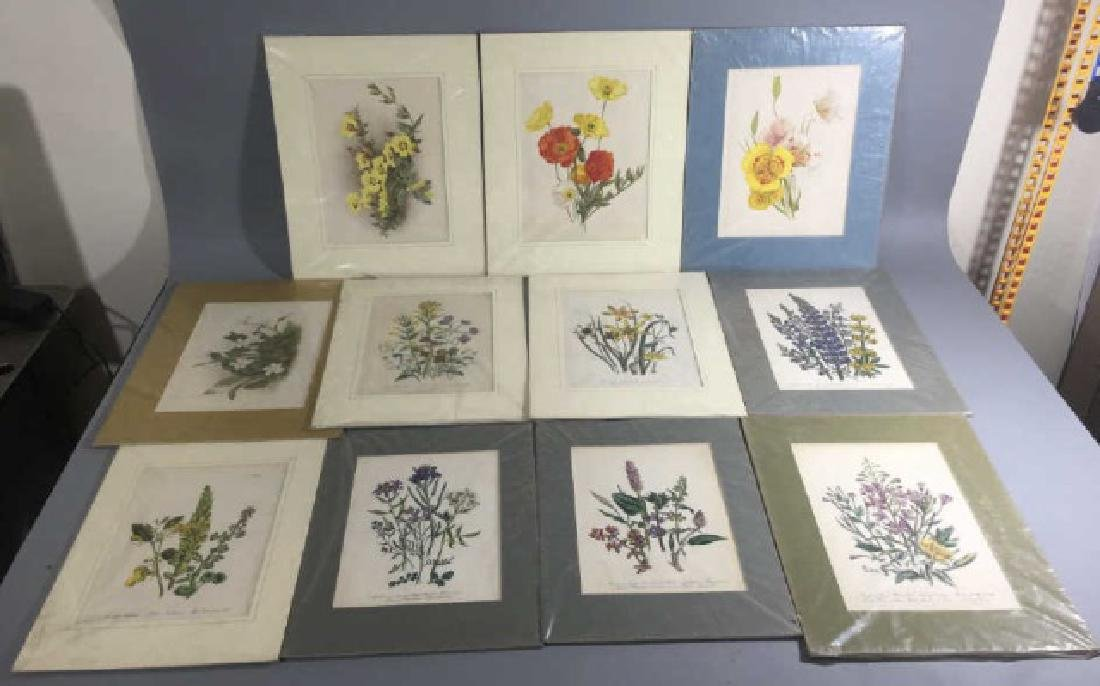 11 Matted Vintage Botanical Color Litho Prints