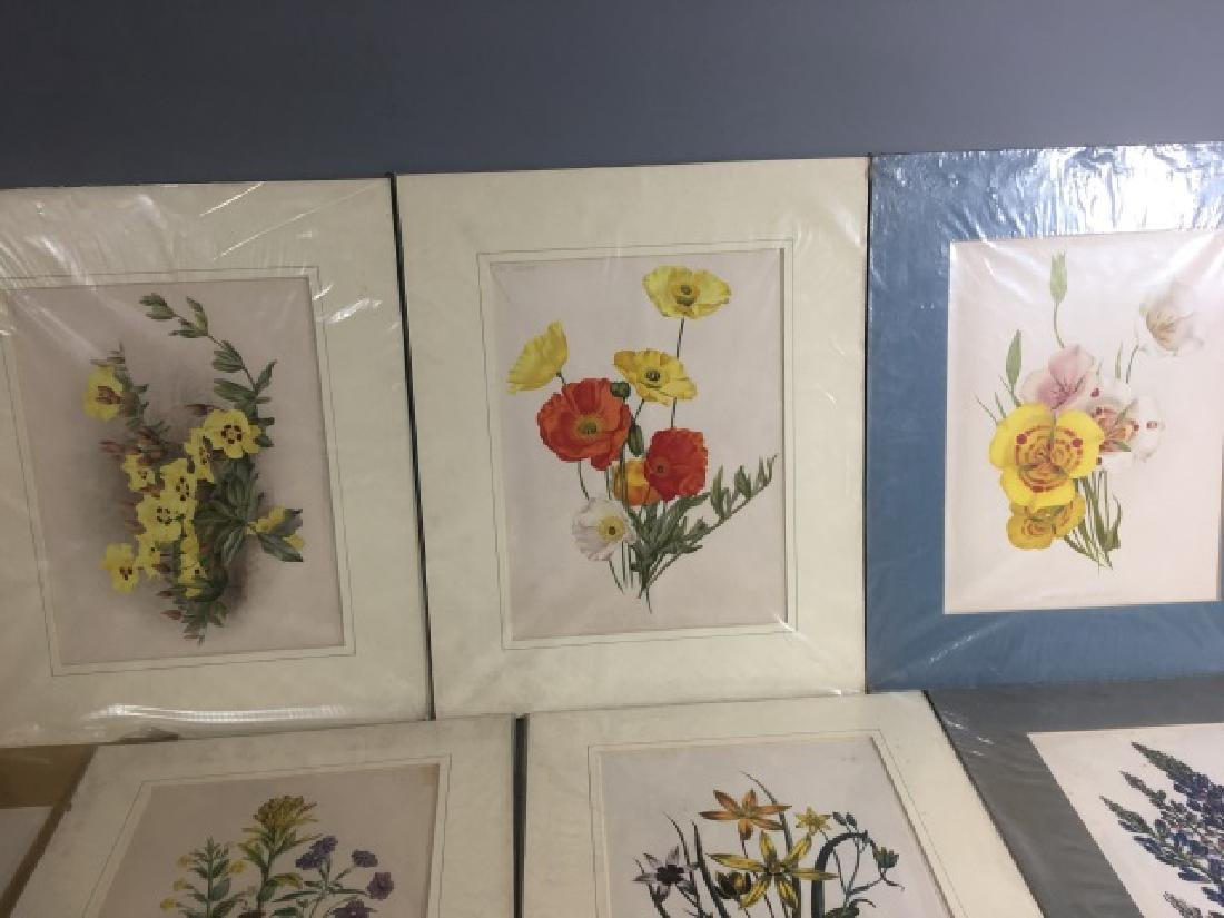 11 Matted Vintage Botanical Color Litho Prints - 2