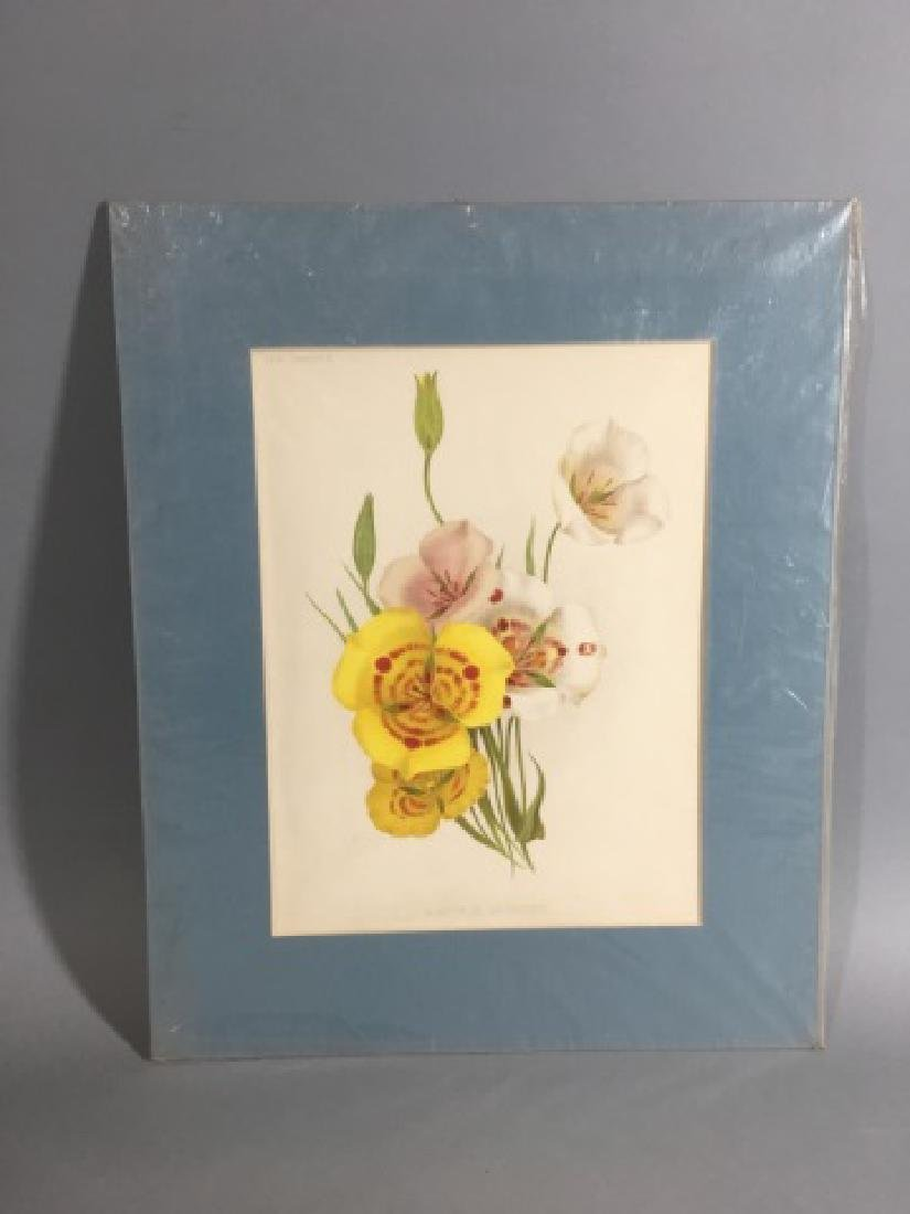 11 Matted Vintage Botanical Color Litho Prints - 4