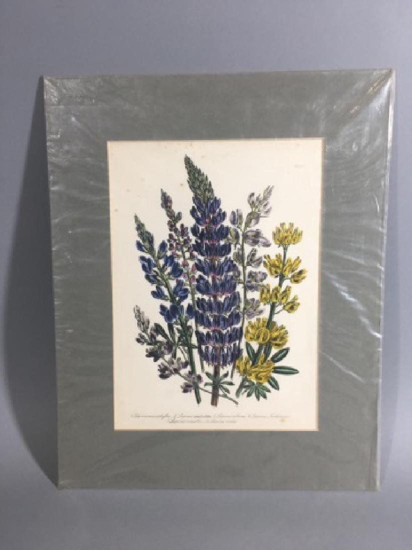 11 Matted Vintage Botanical Color Litho Prints - 5