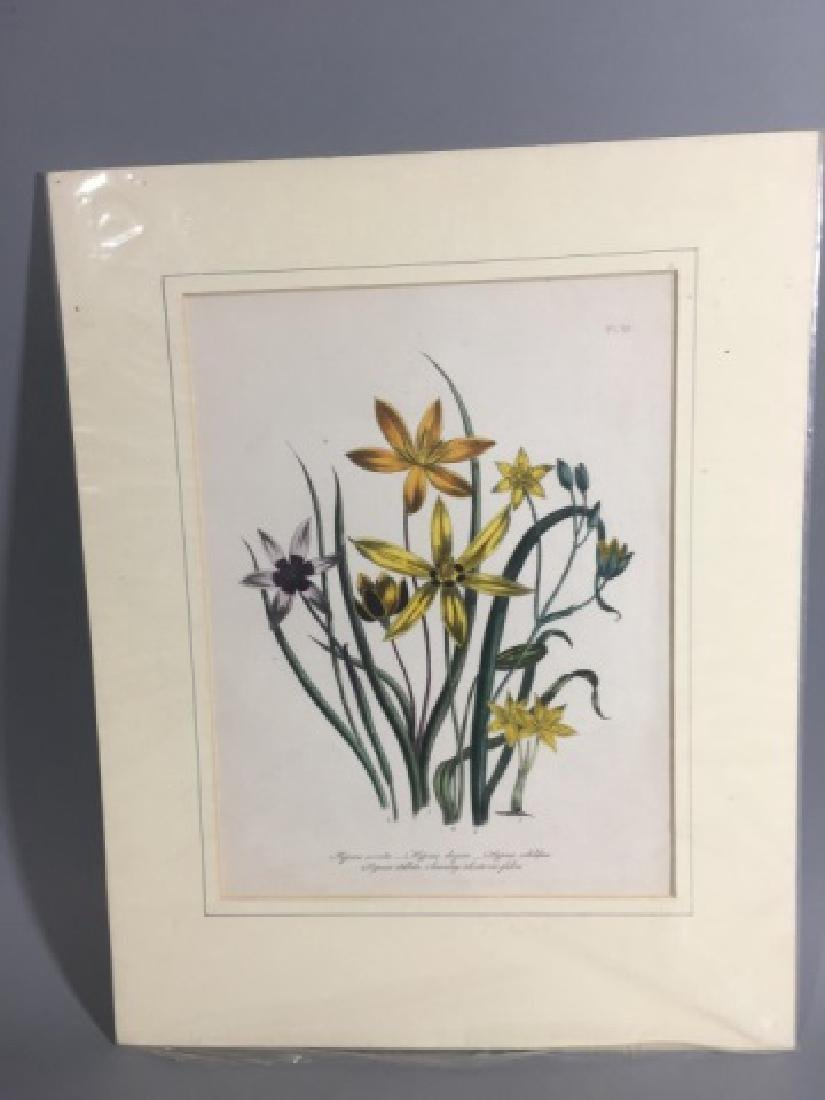 11 Matted Vintage Botanical Color Litho Prints - 6
