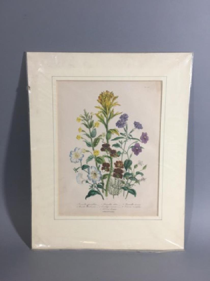 11 Matted Vintage Botanical Color Litho Prints - 8