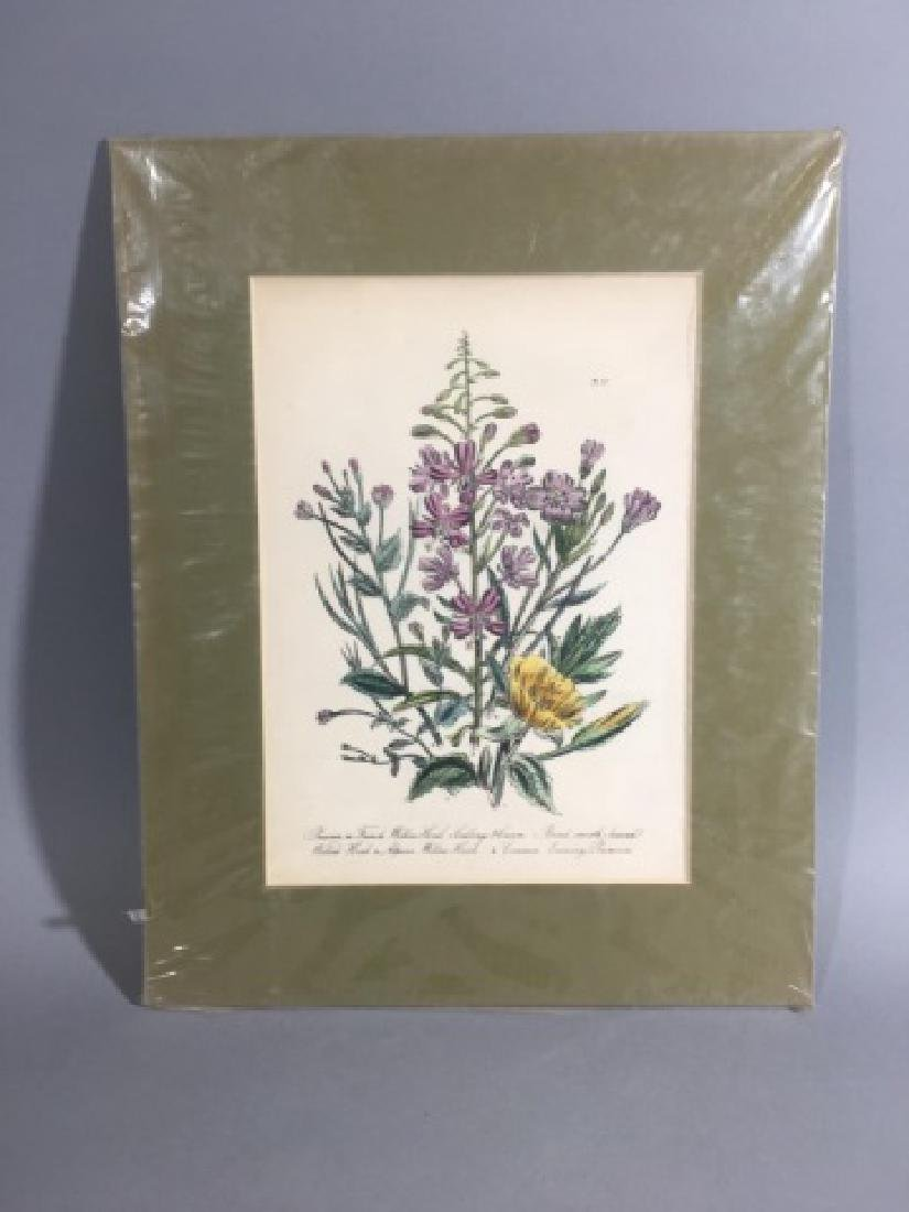 11 Matted Vintage Botanical Color Litho Prints - 9