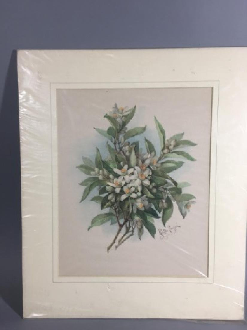 4 19C Botanical Chromolithographs Paul de Longpre - 3