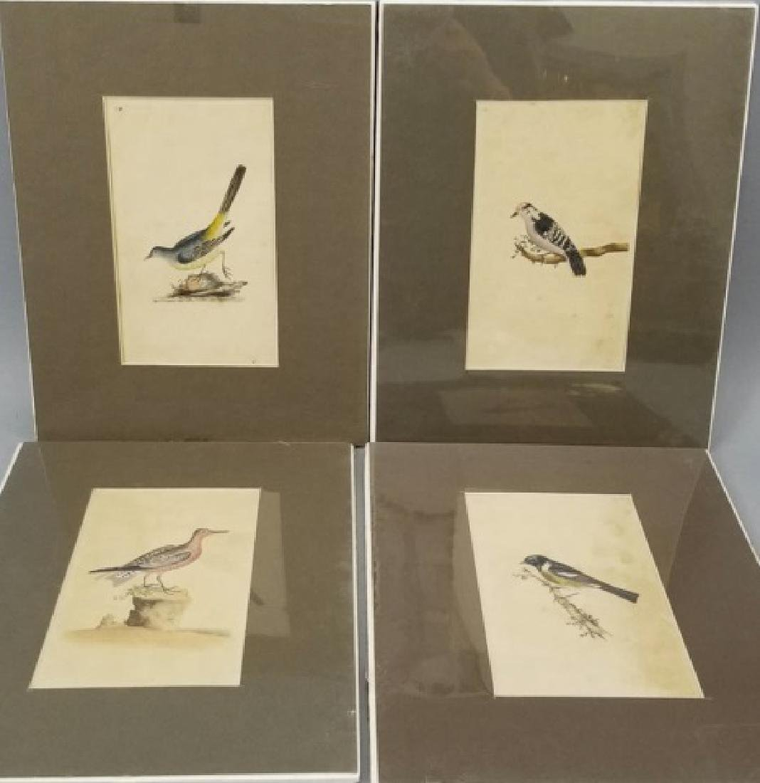Four Antique 19th C Hand Colored Bird Engravings